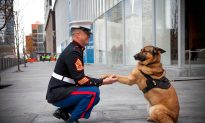 Military Dog Earns Medal After Losing Leg in Afghanistan