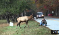'Elk vs. Photographer' Viral Video Carries Serious Backstory About Treating Wildlife