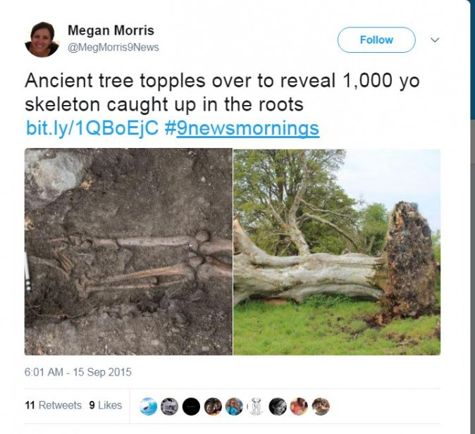 Ancient Tree Topples During Storm, but Look What They Found Tangled In Its Roots