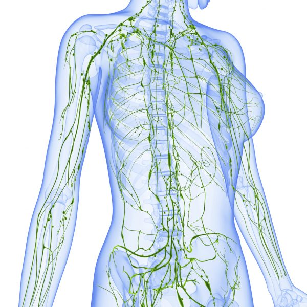 (Lymphatic System /iStock)