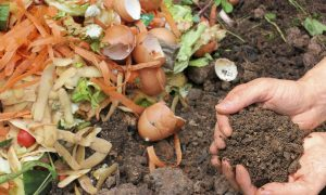 How to Make Your Own Compost Tea
