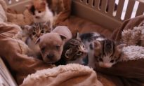 Video: Orphaned Puppy Joins Family of Kittens After Mother Was Hit by Car