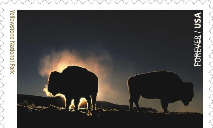 Yellowstone National Park, Idaho-Montana-Wyoming. (Copyright© 2016 USPS)