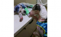 Dog in Rescue Clinic Comforts Puppy Who Was Shot, Dragged, and Spray Painted