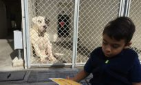 6-Year-Old Autistic Boy Dedicates Time to Read to Shelter Dogs