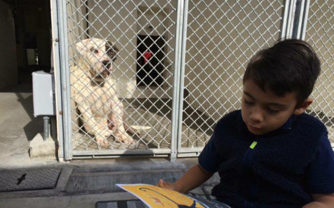 Jacobs at Carson Animal Shelter in Gardena, California (Courtesy Lisa Dekowski-Ferranti)