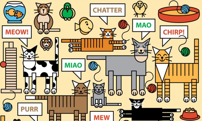 How good are people at interpreting a cat's meow? (Lisa Fischer/Shutterstock)