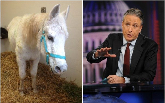Lily, a white mare, left, is being adopted by Jon Stewart, the ex-host of the 'Daily Show.' Lily was found in a sales stable in Lancaster, PA, shot by nearly 130 paintballs. (NBC and AP Photo/Brad Barket)