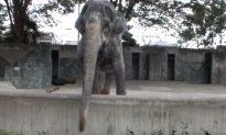Hanako, 'World's Loneliest' Elephant, Dies at Age 69 in Japan
