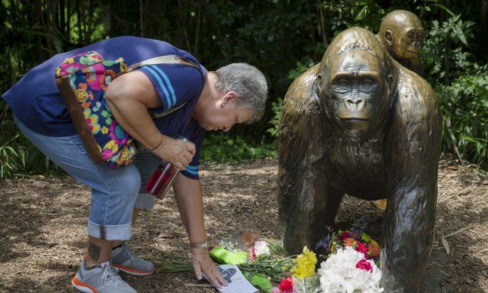 Eula Ray, of Hamilton, whose son is a curator for the zoo, touches a sympathy card beside a gorilla statue outside the Gorilla World exhibit at the Cincinnati Zoo & Botanical Garden, Sunday, May 29, 2016, in Cincinnati.  (AP Photo/John Minchillo)