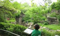 Pictured: Barrier Designed to Keep People out of Gorilla Enclosure at Cincinnati Zoo