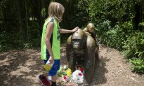 Witness to Cincinnati Zoo Incident Is Harassed Online