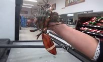 Woman Buys Lobster in Supermarket, Takes It on a Journey Back to the Sea