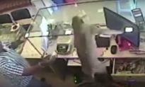 Monkey Tricks Shopkeeper in India, Leaves With 10,000 Rupees