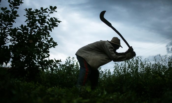 Former slave Francisco Rodrigues dos Santos demonstrates how he clears brush with his sickle on the piece of land which he lives and farms at the Nova Conquista settlement, in Monsenhor Gil, Piau state, Brazil, on April 8, 2015. He said he used the same type of tool when he was enslaved. (Mario Tama/Getty Images)