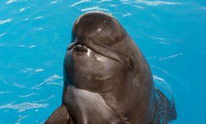 SeaWorld San Diego's Performing Pilot Whale, Bubbles, Dies