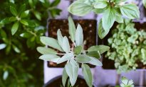 The Herb That Shows Promise Against Heart Disease