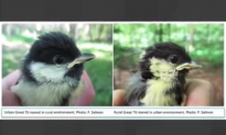 Remarkable Image Shows What Living in Urban Environment Does to Birds (Video)