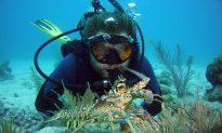 Underwater Beauty at Key Largo