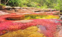 River that Turned Blood Red Caused by Metal Company Spillage