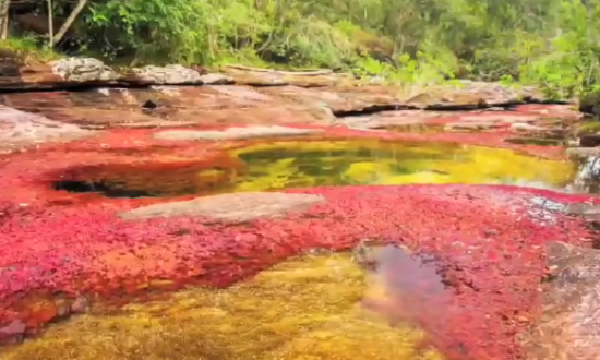 This Bizarre River in Colombia Is Called 'Liquid Rainbow' (Video)