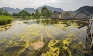 Reducing Water Pollution With Microbes and Wood Chips