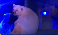 Polar Bear Used for Selfies at 'World's Saddest Zoo' in Chinese Mall (Video)
