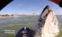 Humpback Whale Shows Appreciation to Flute-Playing Paddle Boarder