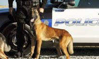 Police K-9 Dies After Vehicle Air Conditioner Fails