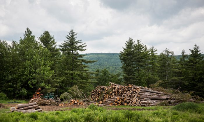 A lumber yard near Clinton Correctional Facility outside Dannemora, N.Y., on on June 18, 2015.   (Andrew Burton/Getty Images)
