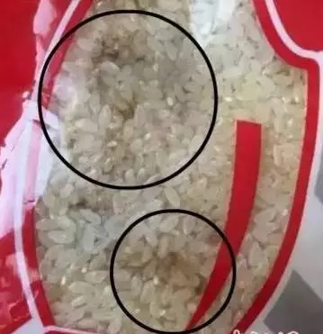 The rice in the kitchen of a Harbin Kindergarten has turned moldy. (http://hlj.sina.com.cn)