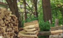 Cat Hiding in Plain Sight Stumps the Internet (Video)