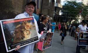 South Korea Shuts Down Largest Dog Meat Slaughterhouse