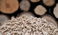 Biomass Subsidies Could Intensify Deforestation
