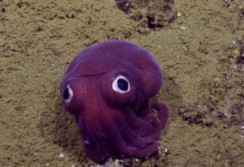 This Recently Spotted Googly-Eyed Sea Creature Has Become an Internet Star (Video)