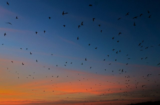 Terns at sunset, Monomoy National Wildlife Refuge, Massachusetts. (Creative Commons/U.S. Fish and Wildlife Service/Flickr)