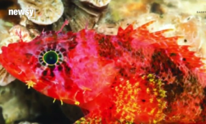 Scientists Keep Finding Strange, New Creatures in the Oceans (Video)