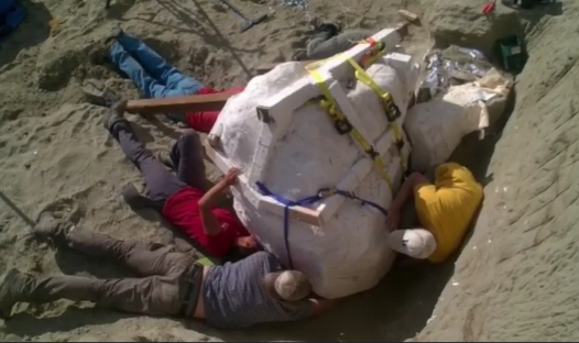 66-Million-Year Old Rare T. Rex Skull Discovered (Video)