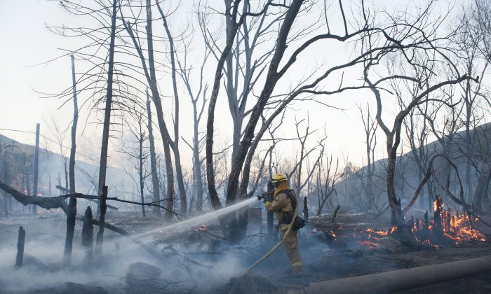 A Cal Fire firefighter sprays a hot spot along Cajon Blvd. off the 15 Freeway after a wildfire burned through the area Wednesday, Aug. 17, 2016, in Keenbrook, Calif.  Firefighters had at least established a foothold of control of the blaze the day after it broke out for unknown reasons in the Cajon Pass near Interstate 15, the vital artery between Los Angeles and Las Vegas. (Kevin Sullivan/The Orange County Register via AP)