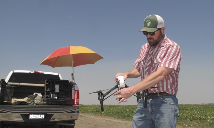 Danny Royer, vice president of technology at Bowles Farming Co., prepares to pilot a drone over a tomato field near Los Banos, Calif. on July 25. (AP Photo/Scott Smith)