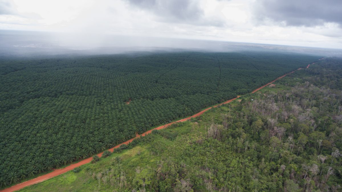 A file photo of the border between Korindo's palm oil plantation company PT Tunas Sawa Erma and the indigenous forest. (Mighty)