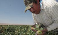 California Expands Already Historic Farm Overtime Policy