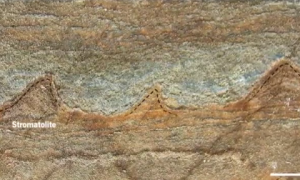 3.7 Billion-Year-Old Fossils Could Be World's Oldest (Video)