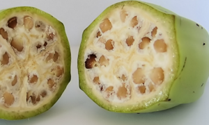 Fruits and Vegetables Looked Very Different Before Humans Domesticated Them