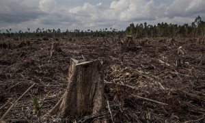 Holding Banks Accountable for Funding Deforestation