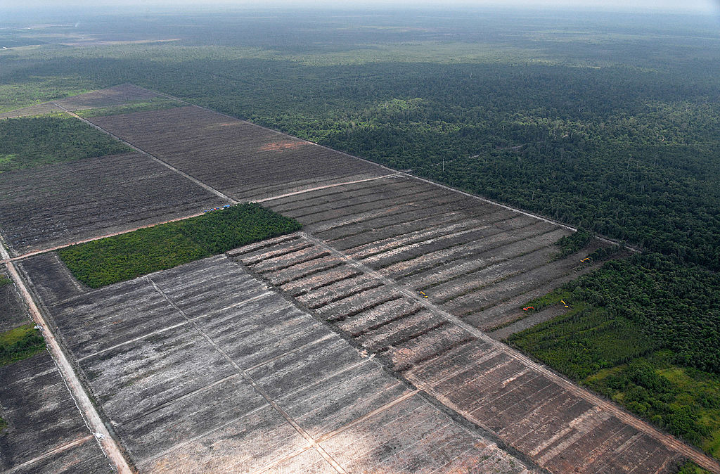 An aerial survey mission by Greenpeace at East Kotawaringin district in Central Kalimantan Province on Indonesia's Borneo island, shows cleared peatland forest developed for a palm oil plantation. (Bay Ismoyo/AFP/Getty Images)