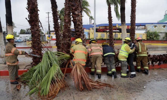 Firemen removed a palm tree felled by Hurricane Newton in Cabo San Lucas, Mexico, Tuesday, Sept. 6, 2016. Newton slammed into the twin resorts of Los Cabos on the southern tip of Mexico's Baja California peninsula Tuesday morning, knocking out power in some places as stranded tourists huddled in their hotels. (AP Photo/Eduardo Verdugo)
