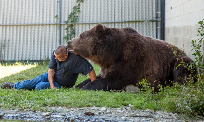 Jim Kowalczik with 22-year-old Kodiak bear Jimbo in one of the bear's enclosures at the Orphaned Wildlife Center in Otisville on Sept. 7, 2016. (James Smith)