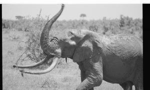 Conservationists Say Now is the Time to Stop Elephant Slaughter