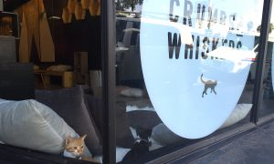Los Angeles' First Cat Cafe Is Cat-Lover Heaven